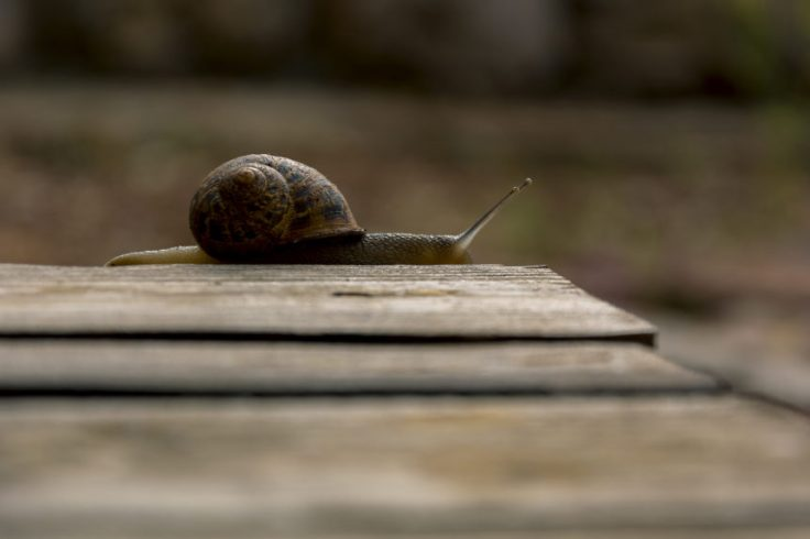 snail on wooden table